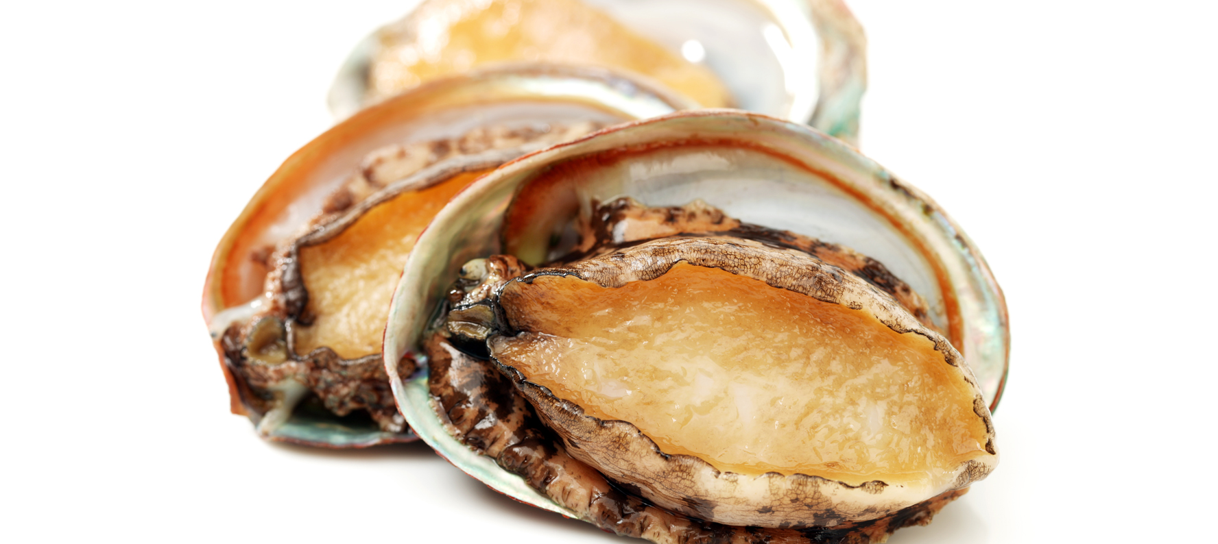 Abalones (Paua) Abalone Extract is udes in natural skin care products because it provides a concentrated source of more than 25 vitamins and minerals and is particularly rich in Selenium, Magnesium and B12.